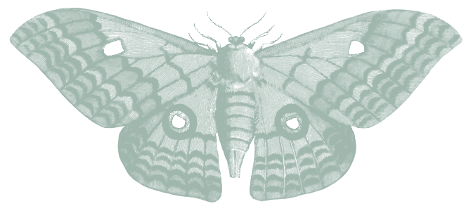 mint green vintage illustration of moth