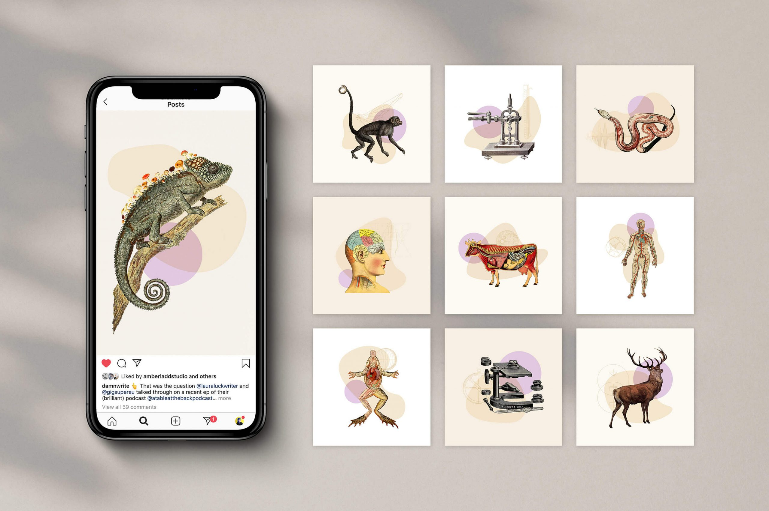 iphone and nine posts showing the rollout of vintage illustrations as apart of brand identity