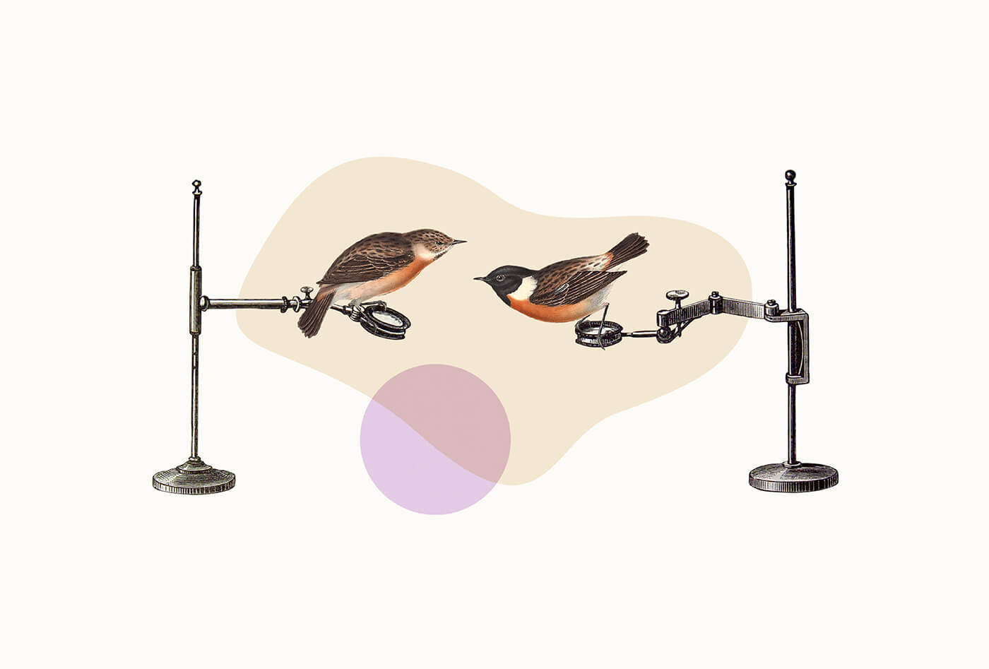 Brand identity collage using vintage illustrations showing two birds on scientific equipment